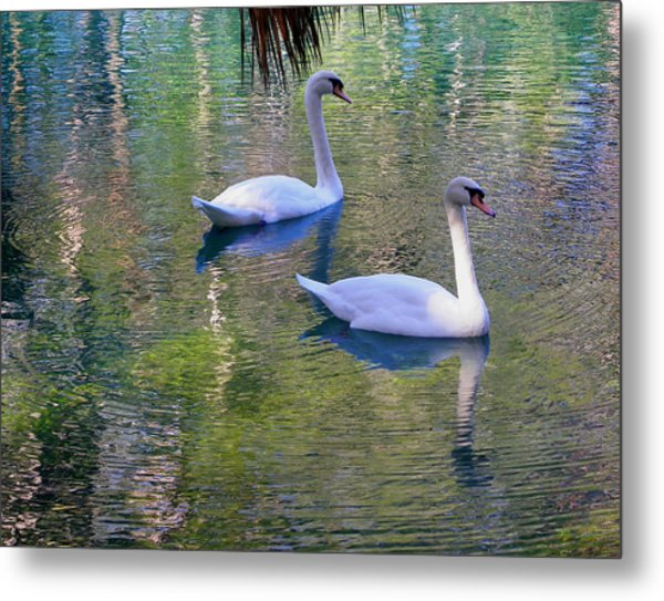 Watercolor Swans Metal Print