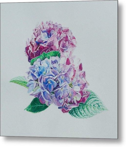 Watercolored Hydrangea Metal Print