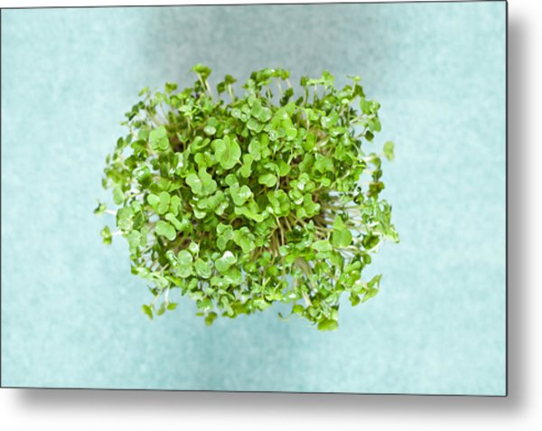 Watercress Metal Print