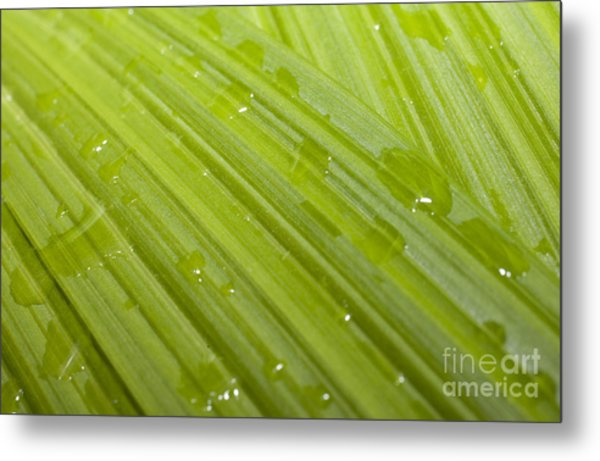 Waterdrops On A Leaf Metal Print by Jonathan Welch
