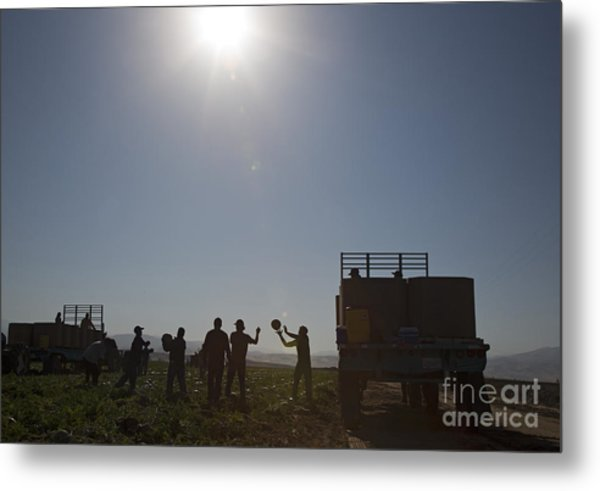 Watermelon Harvest Metal Print