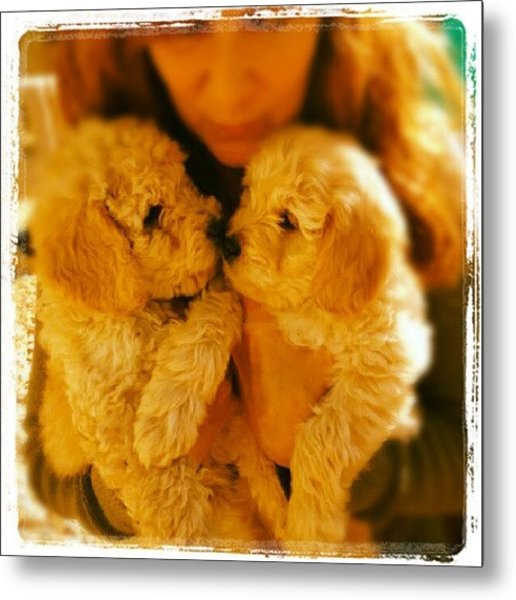 Two Adorable Puppies Metal Print