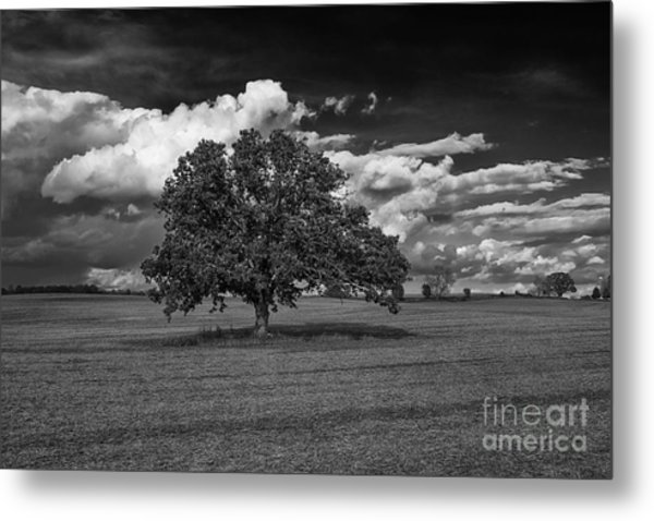 Weathered Oak Metal Print