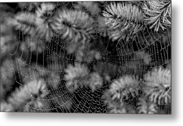 Web Drops Metal Print