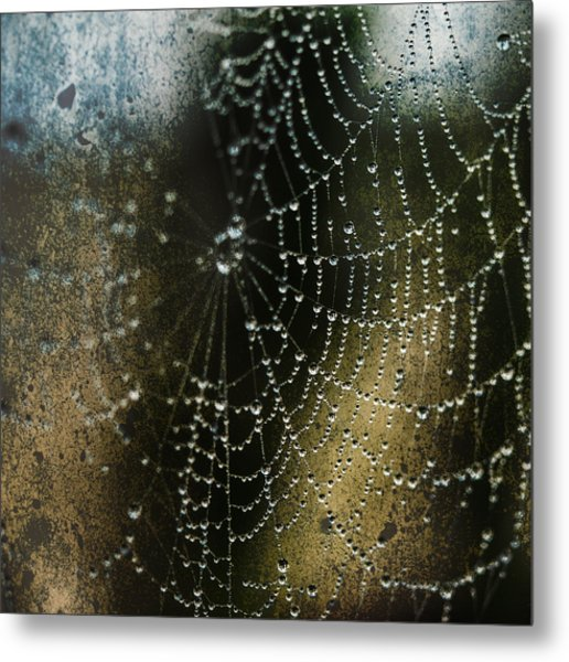 Web In The Mist Metal Print