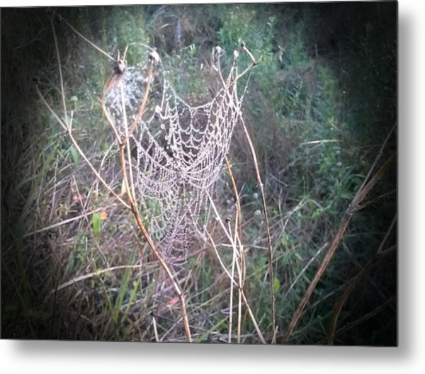 Web Of Dew Metal Print by Chasity Johnson