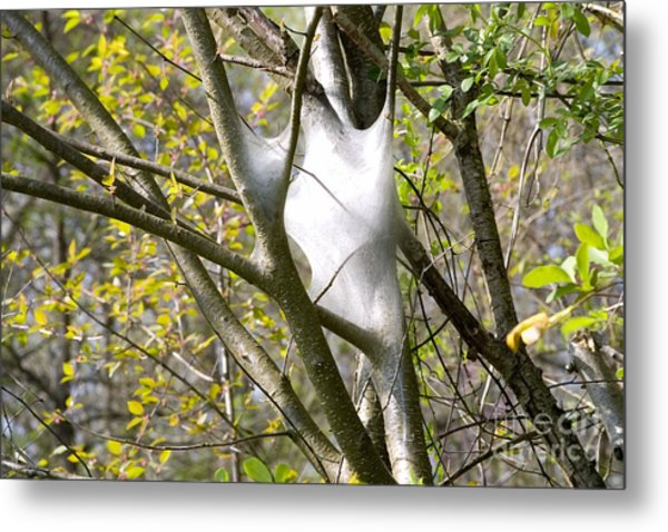 Metal Print featuring the photograph Webbed Branches by Angelique Bowman