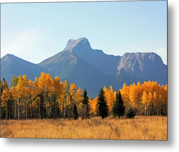 Wedge Mountain And Aspen Metal Print