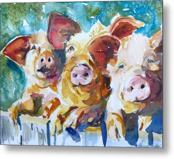 Wee 3 Pigs Metal Print