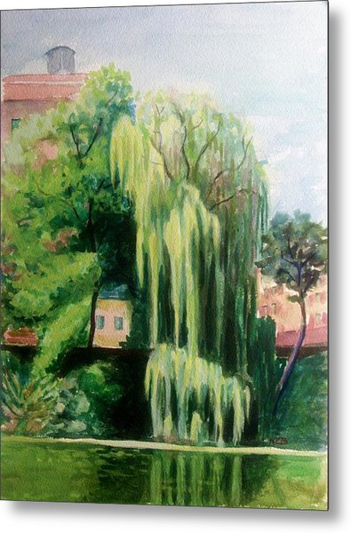 Weeping Willow At North Pond Metal Print