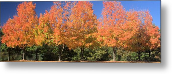 Welcome Autumn Metal Print