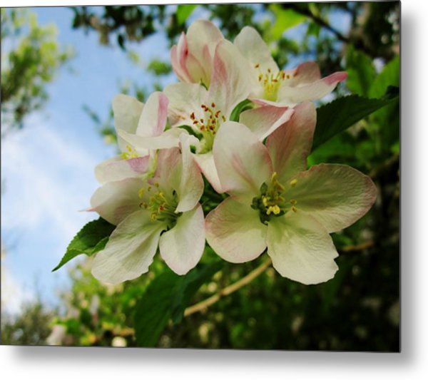 Welcome Blossoms Metal Print