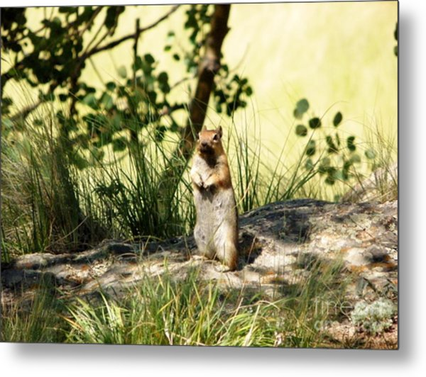 Welcome Metal Print by Michelle Bentham