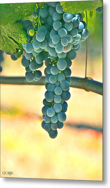 Well Hung Vine Metal Print