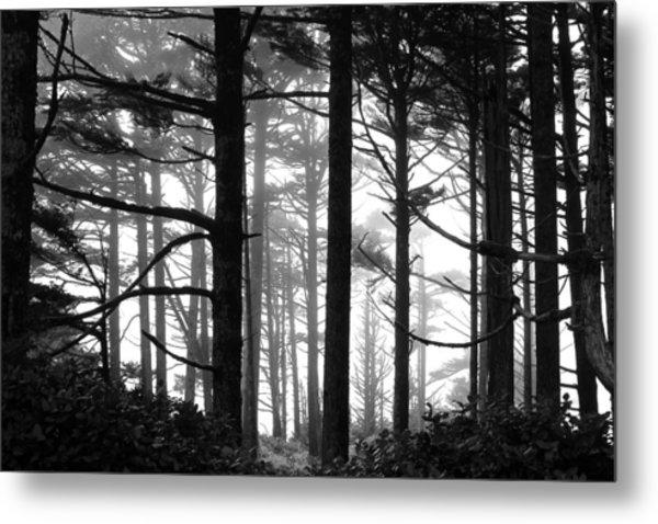 West Coast Trees Metal Print