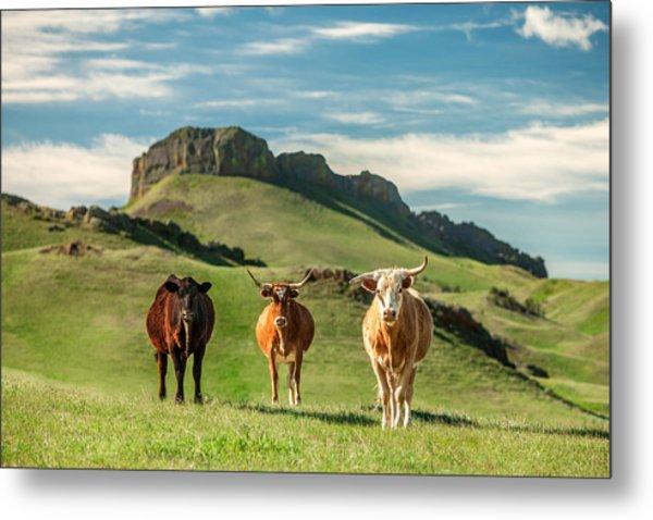 Western Longhorns Metal Print