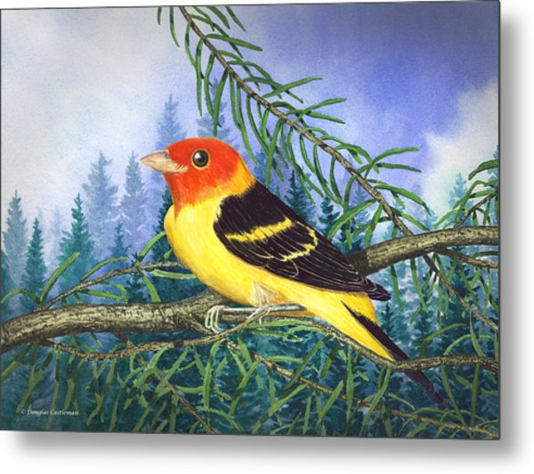 Western Tanager In Yosemite Metal Print