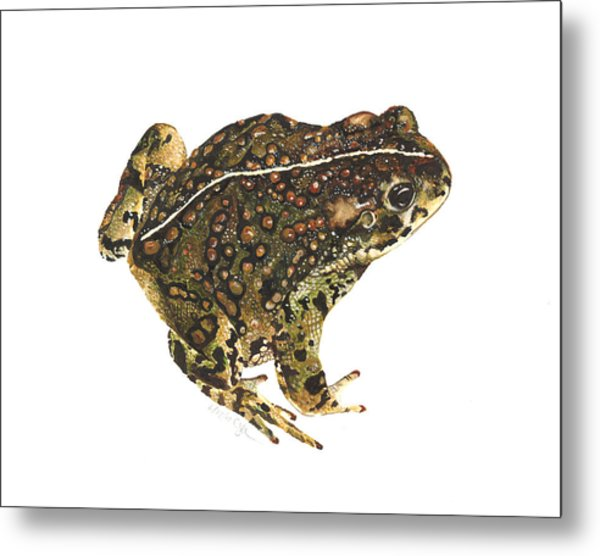 Western Toad Metal Print