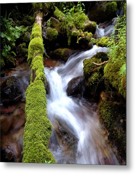 Wet And Green Metal Print