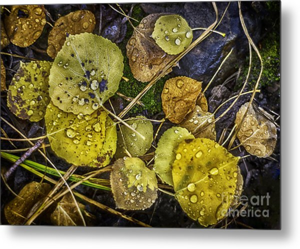 Wet Aspen Floor Metal Print