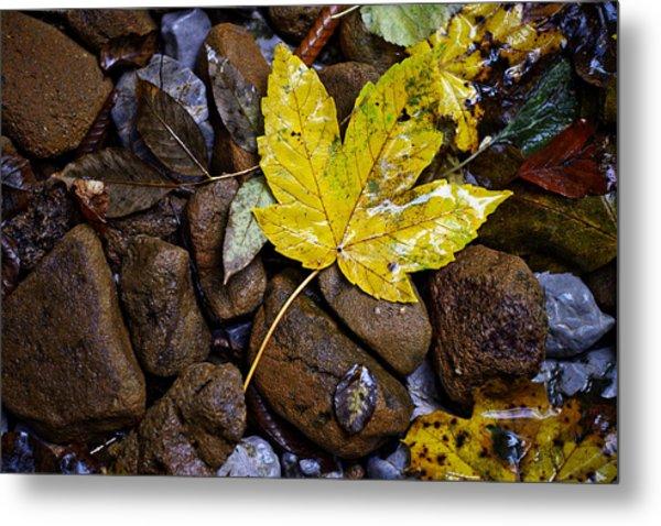 Wet Autumn Leaf On Stones Metal Print