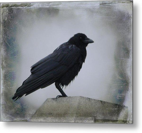 Lone Wet Blackbird Metal Print