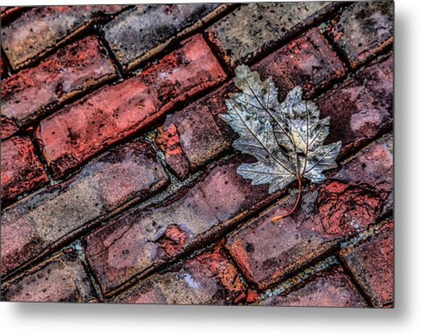 Wet Leaf Road Metal Print