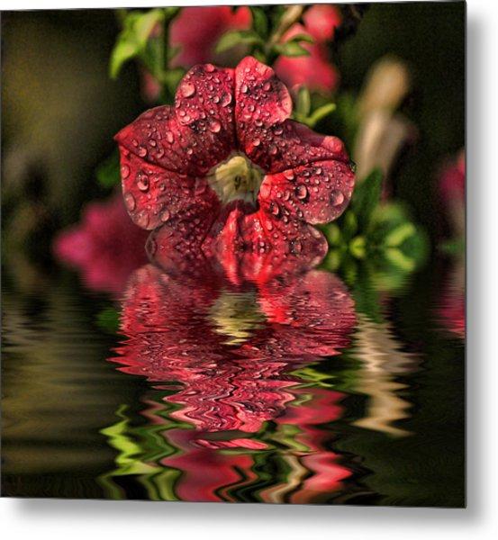 Wet Petunia Metal Print
