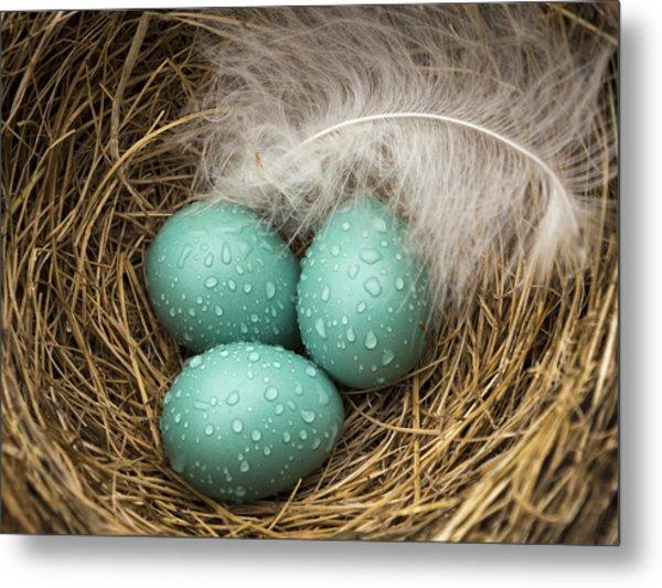 Wet Trio Of Robins Eggs Metal Print