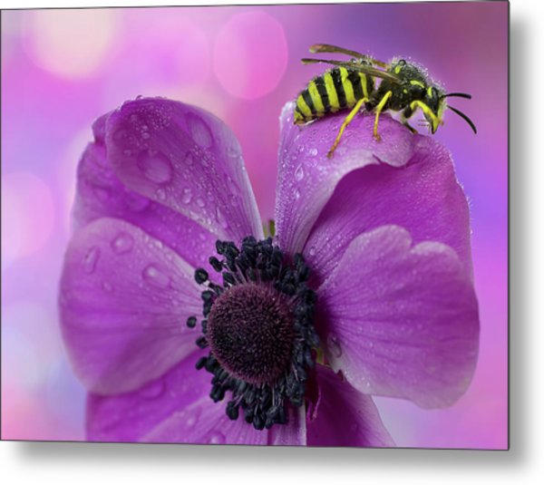 Wet Wasp Metal Print by Mikroman6