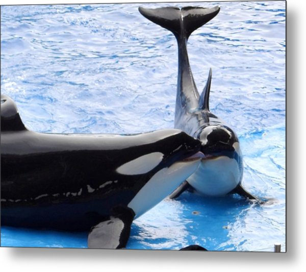 Whale Kiss Metal Print