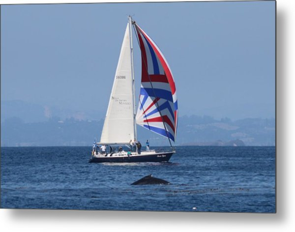 Whale Watching 2  Metal Print