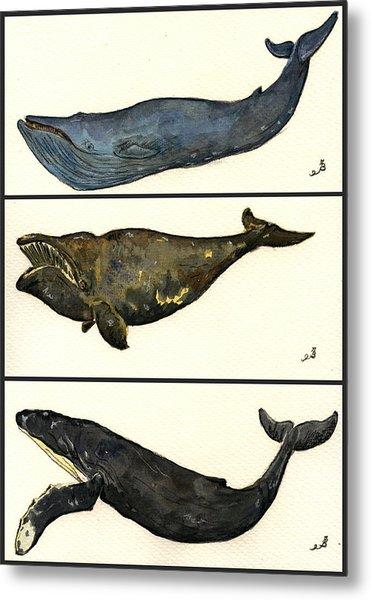 Whales Compilation 1 Metal Print by Juan  Bosco