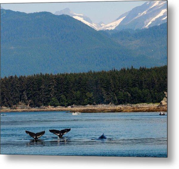 Whales In Alaska Metal Print