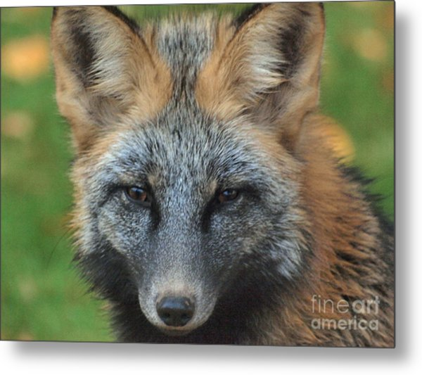 What The Fox Said Metal Print