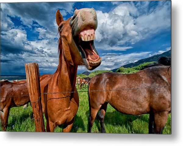 What's So Funny Metal Print