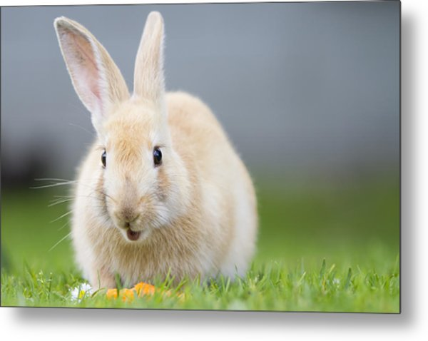 What's Up Doc Metal Print