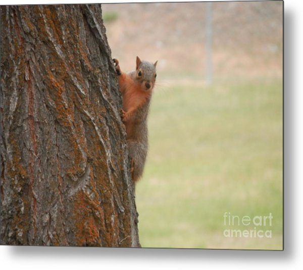 What's Up? Metal Print by Margaret McDermott