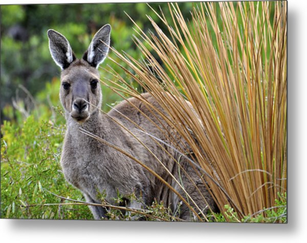 What'ya Lookin' At? Metal Print by Sally Nevin