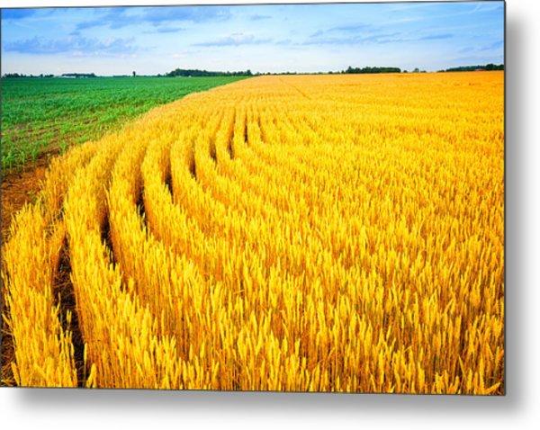 Wheat And Corn Metal Print