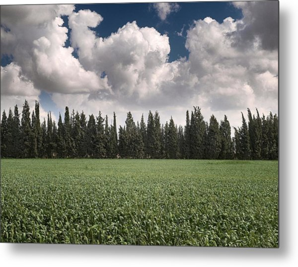 Wheat Field And Clouds Metal Print