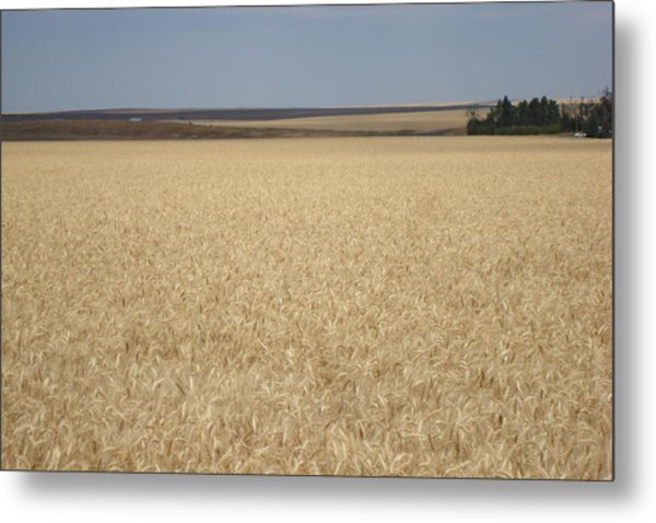 Wheat Fields Forever Metal Print