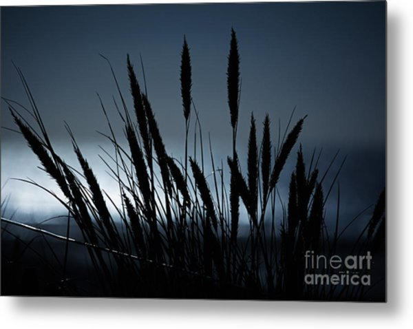 Wheat Stalks On A Dune At Moonlight Metal Print