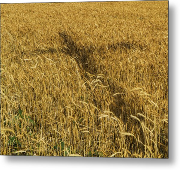 Wheat With Cross  Metal Print