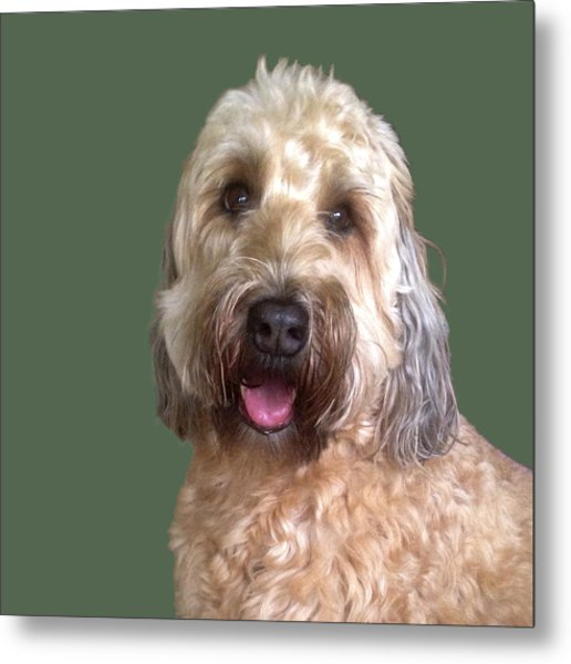 Wheaton Terrier Metal Print