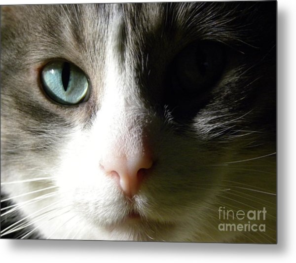 When I Look In Your Eyes.... Metal Print by Laura Yamada
