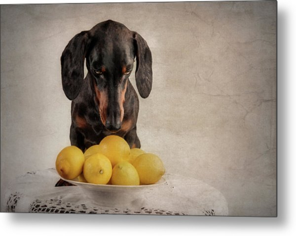 When Life Gives You Lemons... Metal Print by Heike Willers