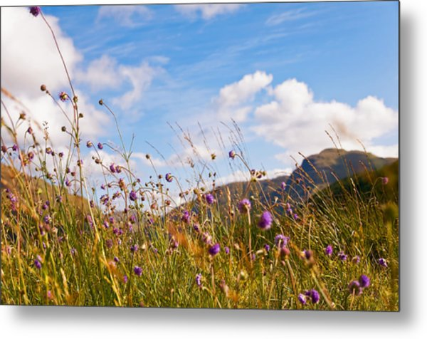 When The Sun Is Shining Everything Around Smiling Towards. Scotland Metal Print