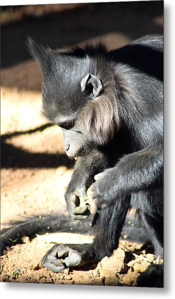 Where Is My Comb Metal Print by Dick Botkin