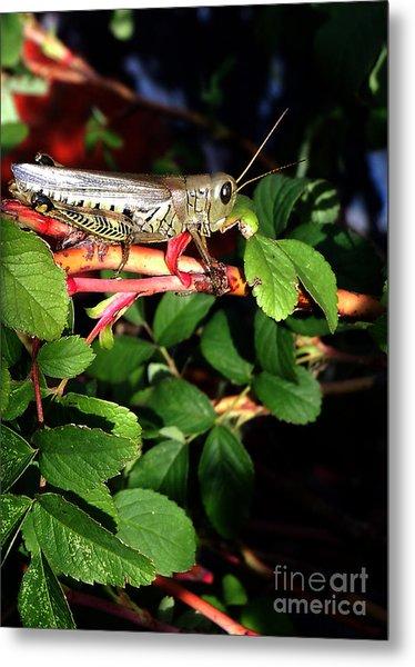 Grasshopper - Close Up Metal Print
